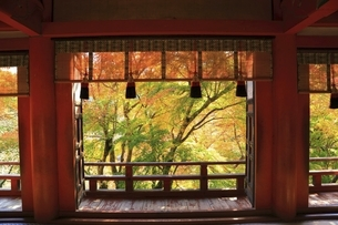 紅葉の談山神社の写真素材 [FYI04772626]