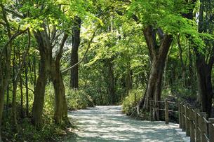 春の公園 森の散策路で森林浴 「神奈川県立四季の森公園」の写真素材 [FYI04772747]