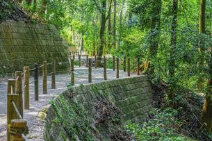 春の公園 森の散策路で森林浴 「神奈川県立四季の森公園」の写真素材 [FYI04772748]