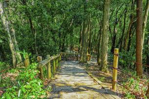 春の公園 森の散策路で森林浴 「神奈川県立四季の森公園」の写真素材 [FYI04772749]