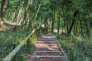 春の公園 森の散策路で森林浴 「神奈川県立四季の森公園」の写真素材 [FYI04772751]