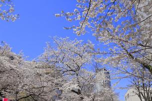 目黒川の桜の写真素材 [FYI04772793]