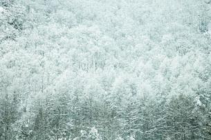 厳冬の森の写真素材 [FYI04772843]