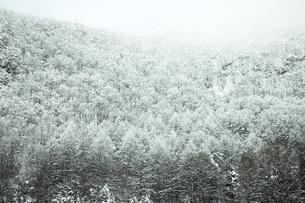 厳冬の森の写真素材 [FYI04772844]