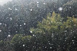 激しく降る雪の写真素材 [FYI04772982]