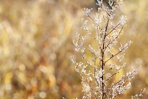 霜がついた木の枝の写真素材 [FYI04772990]
