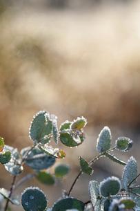 霜がついた木の枝の写真素材 [FYI04772996]