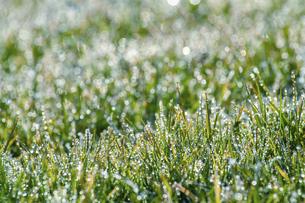 霜のおりた草むらの写真素材 [FYI04773007]