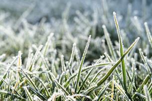 霜のおりた草むらの写真素材 [FYI04773020]