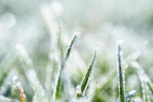 霜のおりた草むらの写真素材 [FYI04773021]