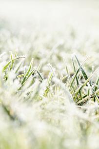 霜のおりた草むらの写真素材 [FYI04773022]