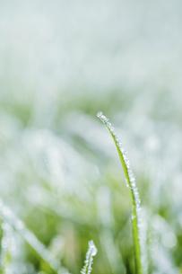霜のおりた草むらの写真素材 [FYI04773024]