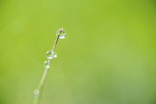 氷のついた草の葉の写真素材 [FYI04773033]