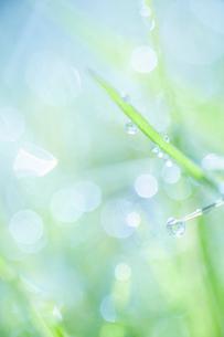 氷のついた草の葉の写真素材 [FYI04773035]