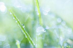 氷のついた草の葉の写真素材 [FYI04773036]