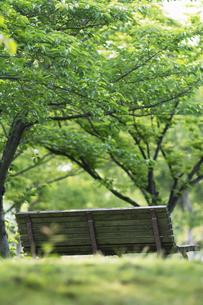 公園のベンチの写真素材 [FYI04773045]