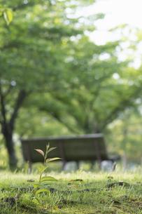 若木と公園の写真素材 [FYI04773046]