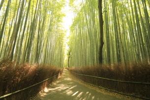 6月  木漏れ日の竹林の道(壁紙用)  -恋人たちの小径--の写真素材 [FYI04773168]