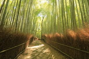 6月  木漏れ日の竹林の道(壁紙用)  -恋人たちの小径--の写真素材 [FYI04773172]