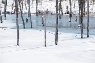 氷が溶け始めた青い池の写真素材 [FYI04773302]