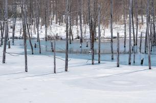 氷が溶け始めた青い池の写真素材 [FYI04773303]
