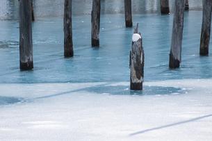 氷が溶け始めた青い池の写真素材 [FYI04773305]