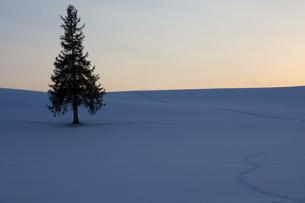 冬の日没の雪原と松の木の写真素材 [FYI04773306]