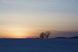早春の夕暮れの丘に立つ冬木立の写真素材 [FYI04773312]