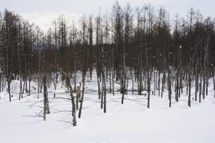 早春の湖と雪山の写真素材 [FYI04773316]