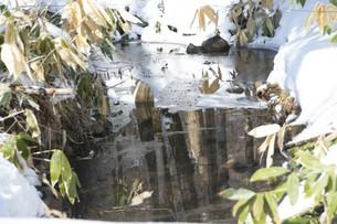 山奥の雪融けの沢の写真素材 [FYI04773324]