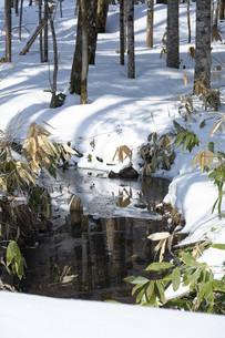 山奥の雪融けの沢の写真素材 [FYI04773325]