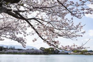 桜の咲く水辺の公園の写真素材 [FYI04773521]