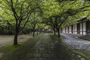 緑の寺院の写真素材 [FYI04773532]