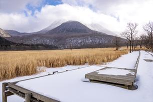大分県 タデ原湿原の雪景色の写真素材 [FYI04773570]