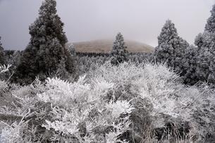 熊本県 阿蘇 杵島岳登山口の樹氷の写真素材 [FYI04773580]
