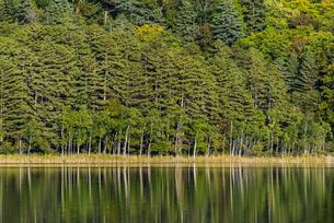 オンネトーの森と鏡面反射する湖面の写真素材 [FYI04773707]