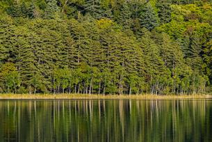 オンネトーの森と湖面の写真素材 [FYI04773722]