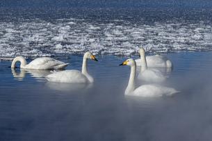 北海道 屈斜路湖の冬の風景の写真素材 [FYI04773760]