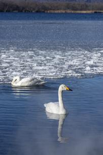 北海道 屈斜路湖の冬の風景の写真素材 [FYI04773761]