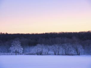 霧氷の写真素材 [FYI04773860]