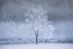 霧氷の写真素材 [FYI04773866]