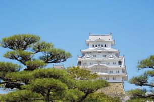 春の新生姫路城の写真素材 [FYI04773931]