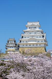 新生姫路城と桜の写真素材 [FYI04773932]