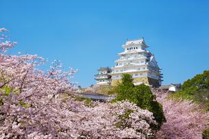 新生姫路城と桜の写真素材 [FYI04773938]