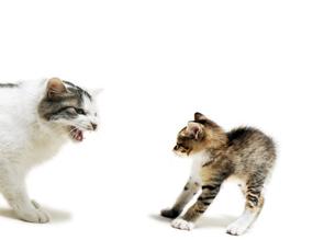 睨み合う子猫の写真素材 [FYI04773967]