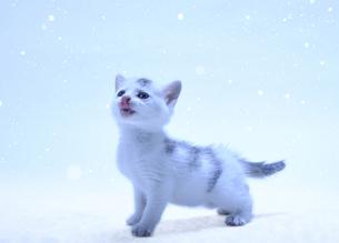 子猫と小雪の写真素材 [FYI04773971]