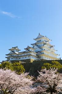 桜咲く新生姫路城の写真素材 [FYI04773981]