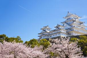 桜咲く新生姫路城の写真素材 [FYI04773983]
