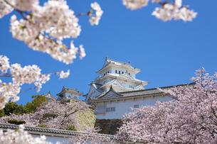 桜咲く新生姫路城の写真素材 [FYI04773994]