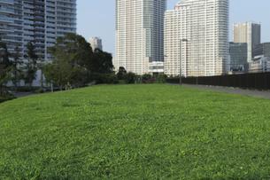 公園の草地の広場と高層タワーマンション群の写真素材 [FYI04774005]